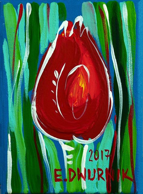 Tulipan, 2017 r.