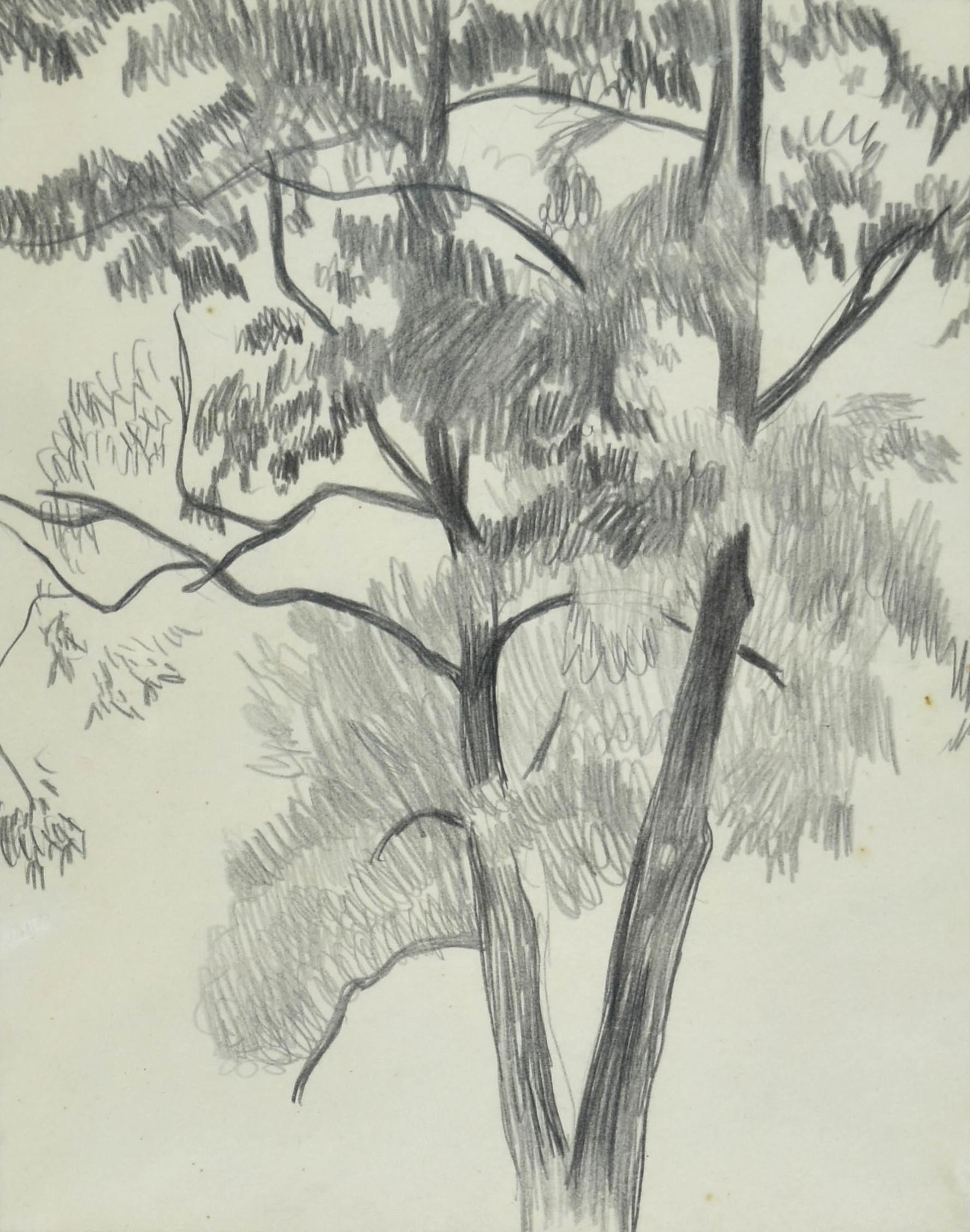 Studium drzewa, ok. 1905
