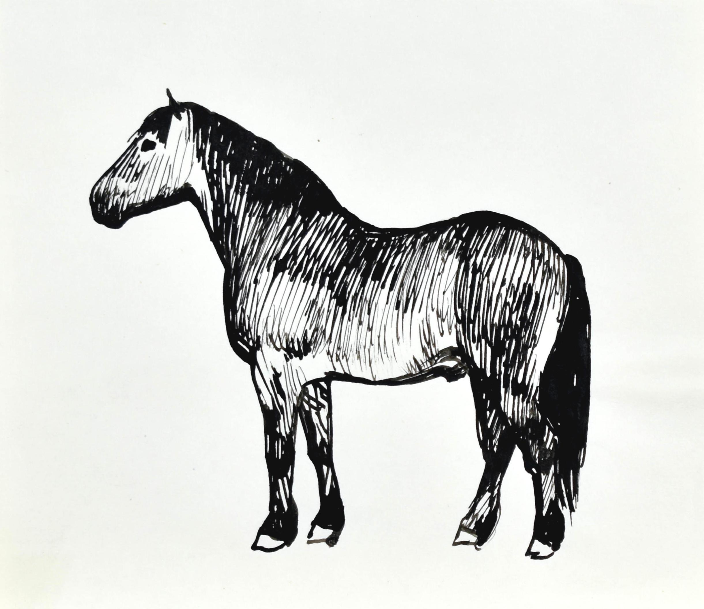 Koń w ujęciu z lewego boku