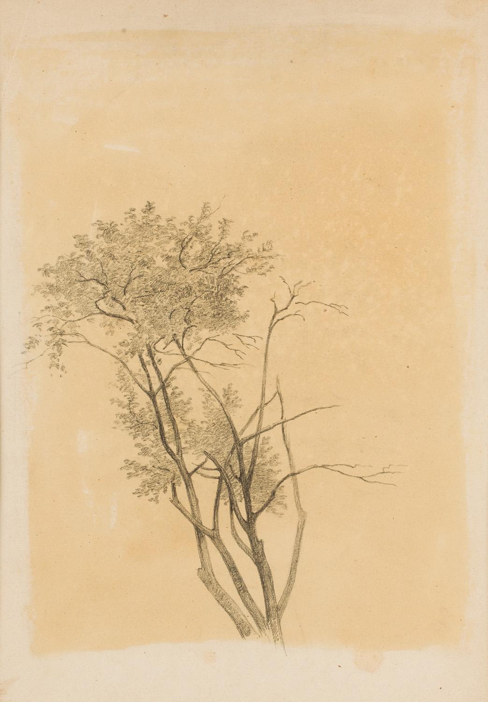 """Drzewo"", 1875-1887"