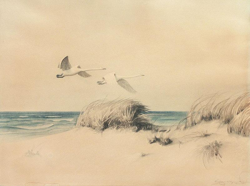 Pejzaż z wydmami