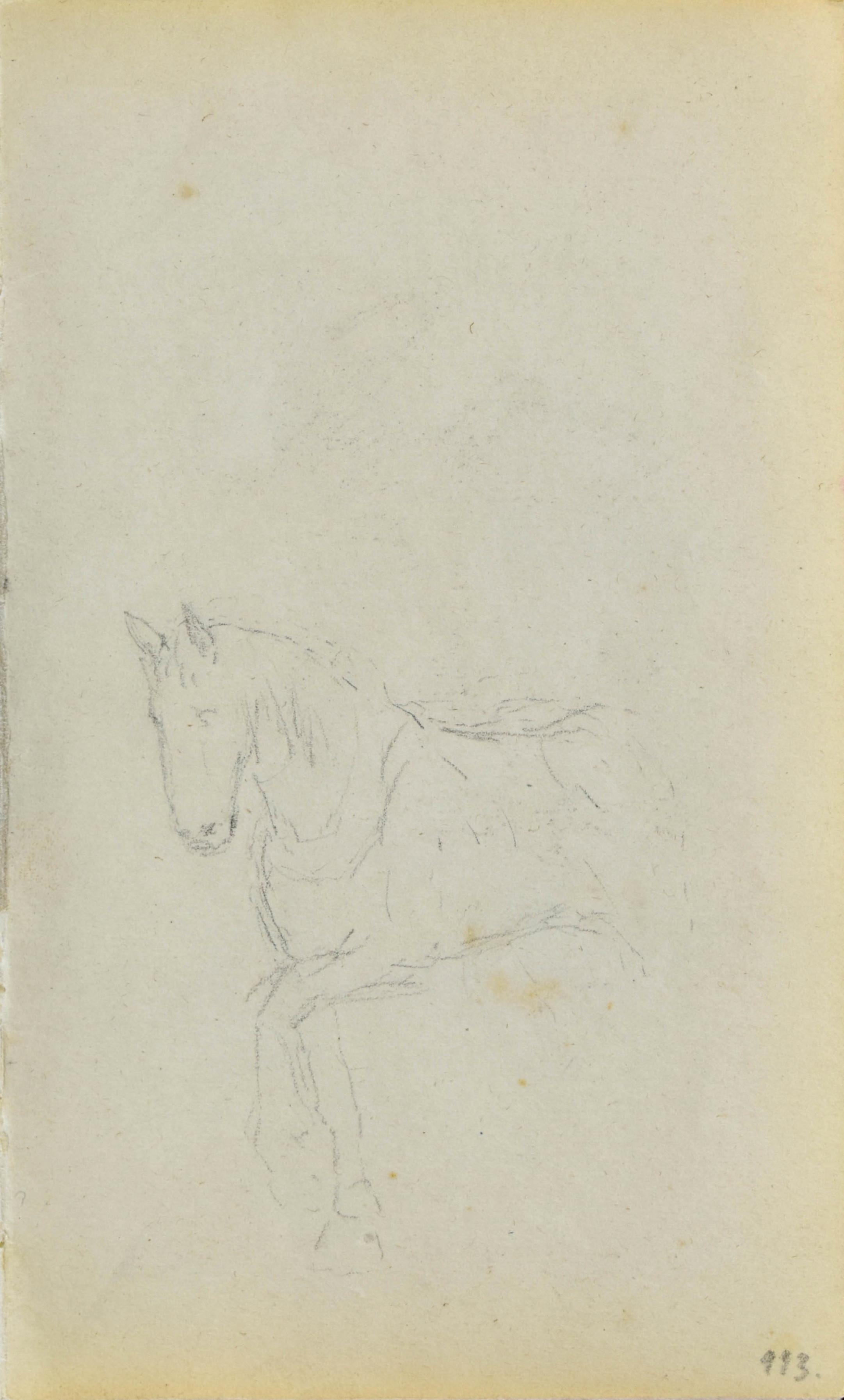 Szkic kroczącego konia