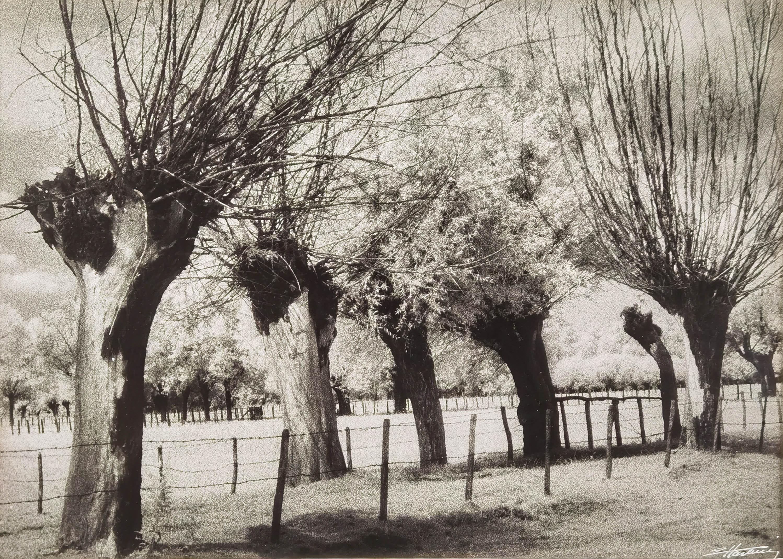 Wierzby mazowieckie, 1970