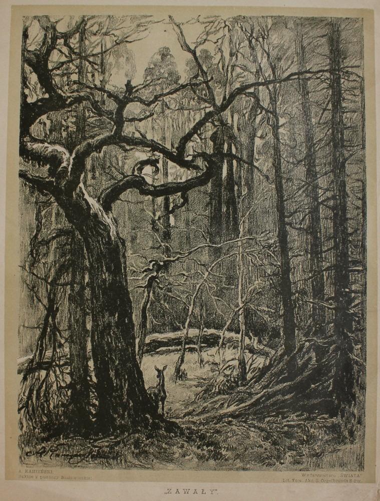 Zawały (z teki Szkice z Puszczy Białowieskiej, 1912)